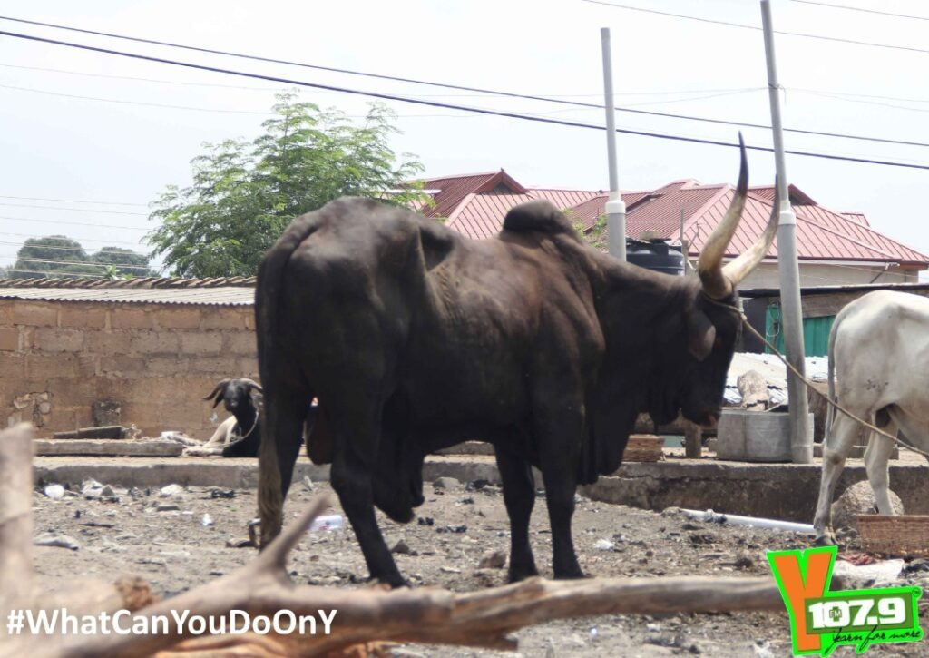 YFM presents Chief Imam a cow for Eid-Al-Adha Celebrations